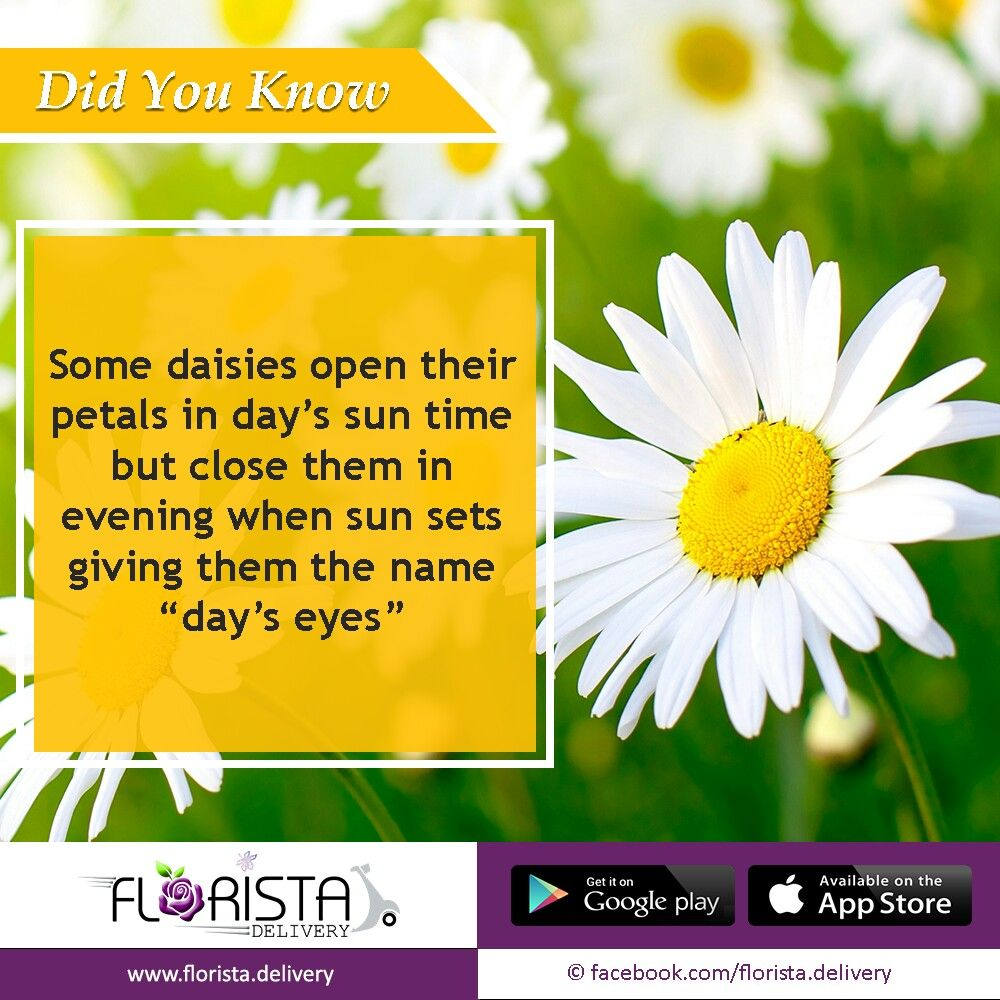 Daisy Flower Fact Flower Facts Pinterest Flowers Facts And Daisy