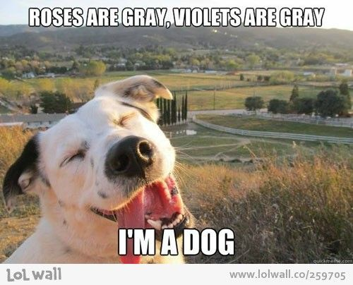 Funny Animal Memes : Roses are gray on lol wall by magda lena funny animals meme dog