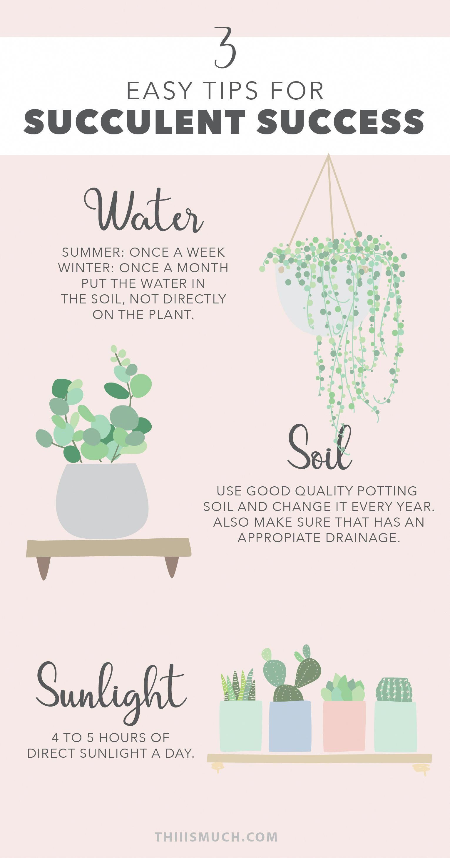3 easy tips for succulent success  Succulents and cactus are the best plants to have at home if you're a busy person  But they need you to treat them carefully because, believe it or not, they can die  These three tips are the basis for the good care of your green friends  Succulents care  Cactus care  is part of Plants -