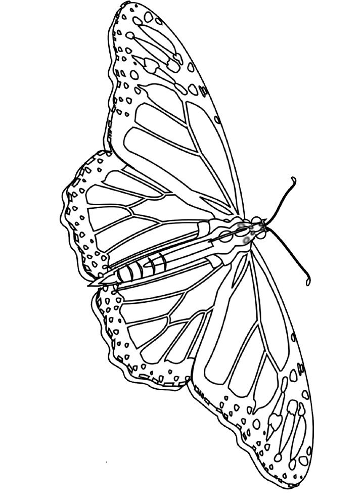 Monarch Butterfly Coloring Pages Butterfly Coloring Page Cool