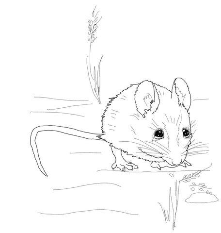 Ratón de Campo pequeño Dibujo para colorear | animales | Pinterest ...