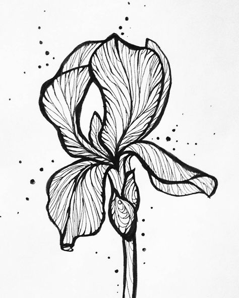 Flowers Drawing Iris 42 Ideas Flower Drawing Iris Drawing Iris Painting