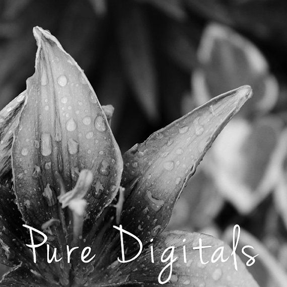 Printable Photography, Flower Photography, Wyoming Photography, Instant Download,  Nature Photography,