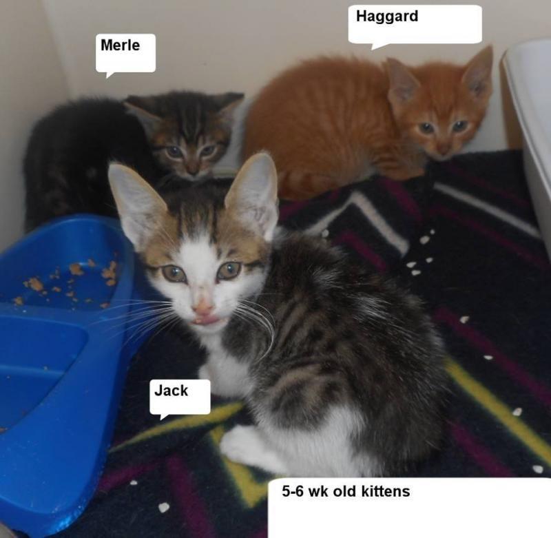 Adopt Merle Haggard Jack On Adoption Merle Haggard Pets