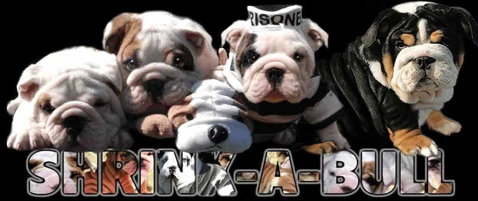 Miniature French Bulldog Puppies For Sale Nc Bulldog Puppies