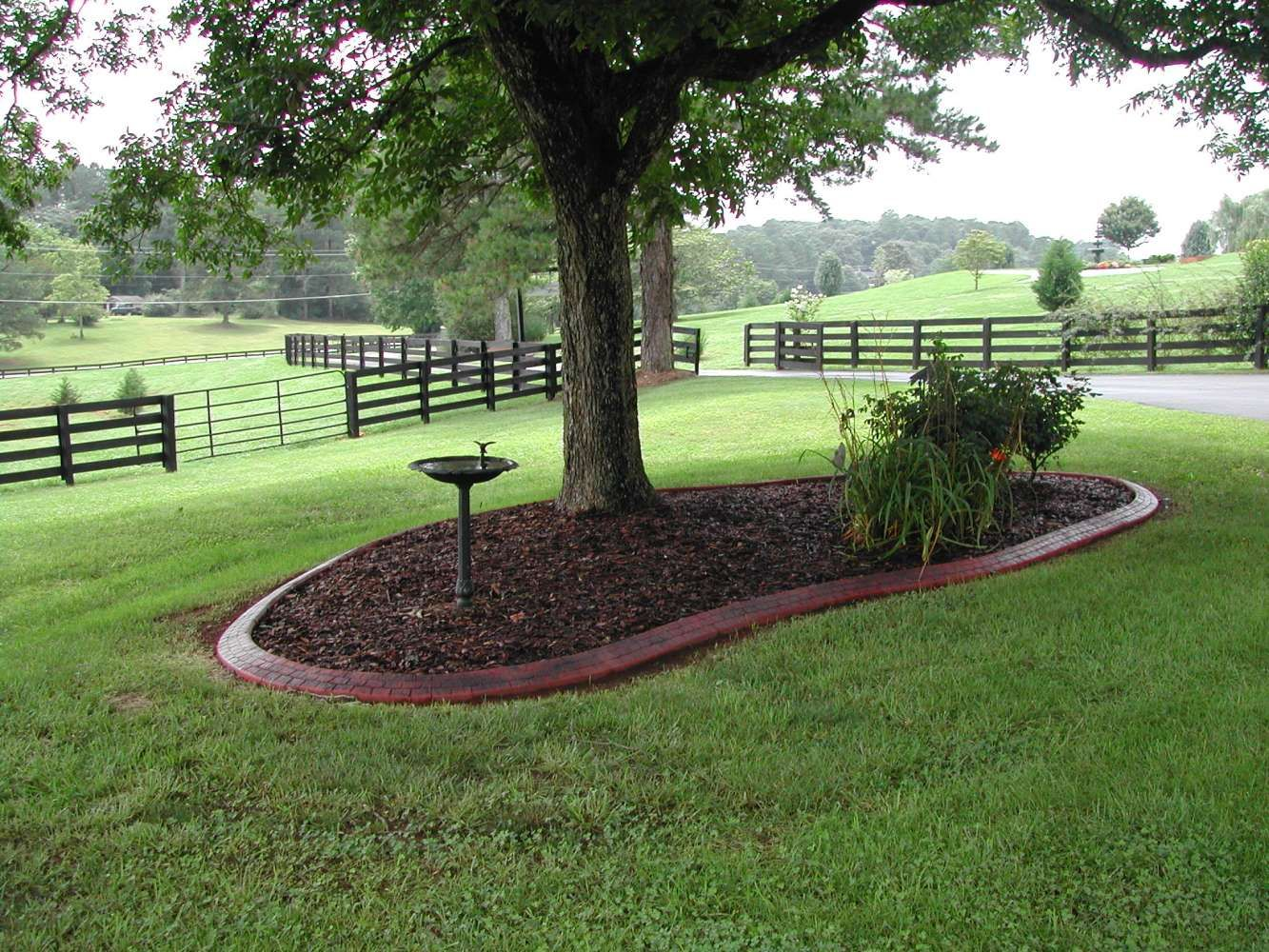 Gardening around trees coastal curbing bringing curb for Tree landscaping ideas
