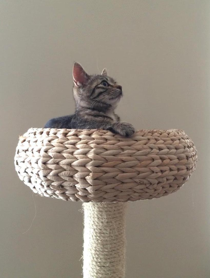 Katzen das Kratzen an Möbeln abgewöhnen   Frag Mutti   Katzen ...