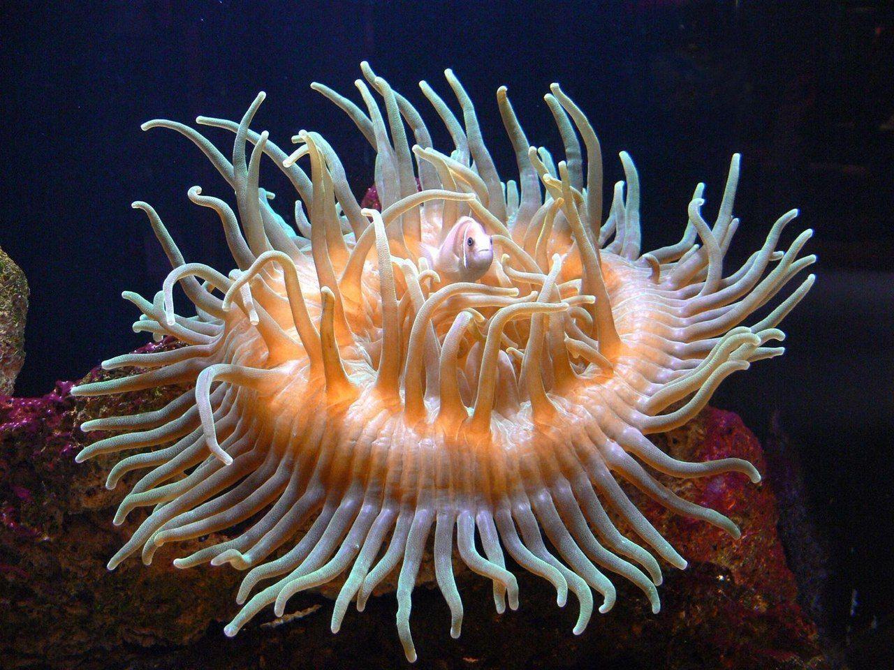 фото морских обитателей с описанием известно, мария является