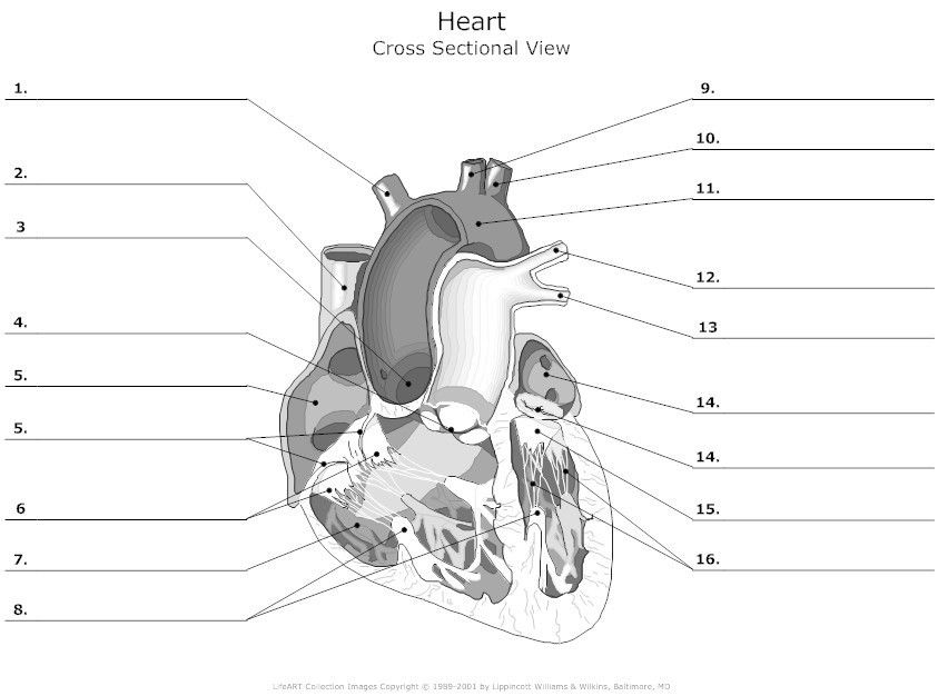 Heart Diagram Worksheet Blank HDW10 (With images) | Heart ...