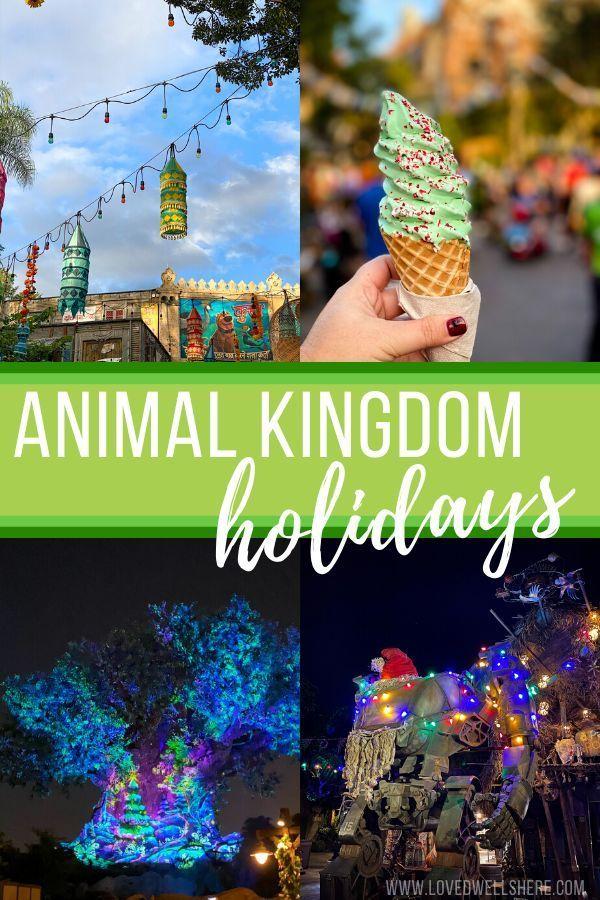 Celebrate the Holidays at Animal Kingdom #animalkingdom