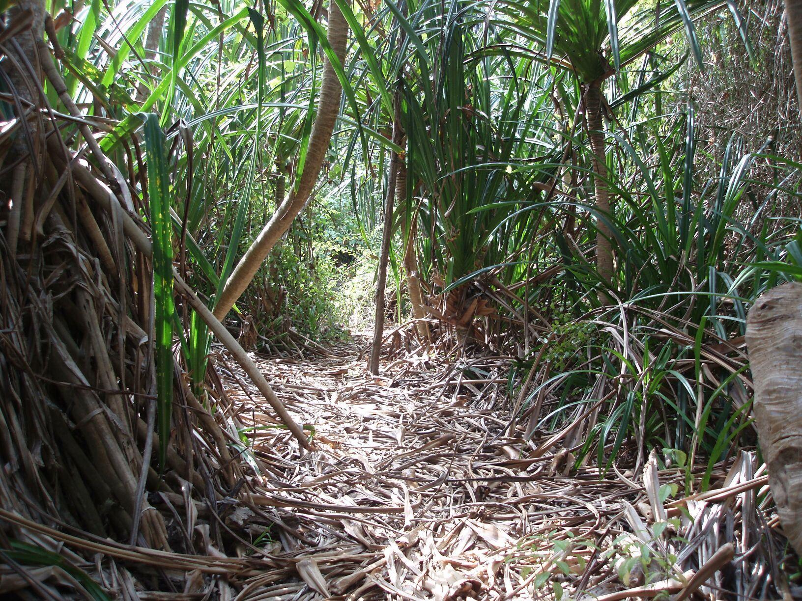 Nice Xmas_jungle_trail (JPEG Image, 1632 × 1224 Pixels)