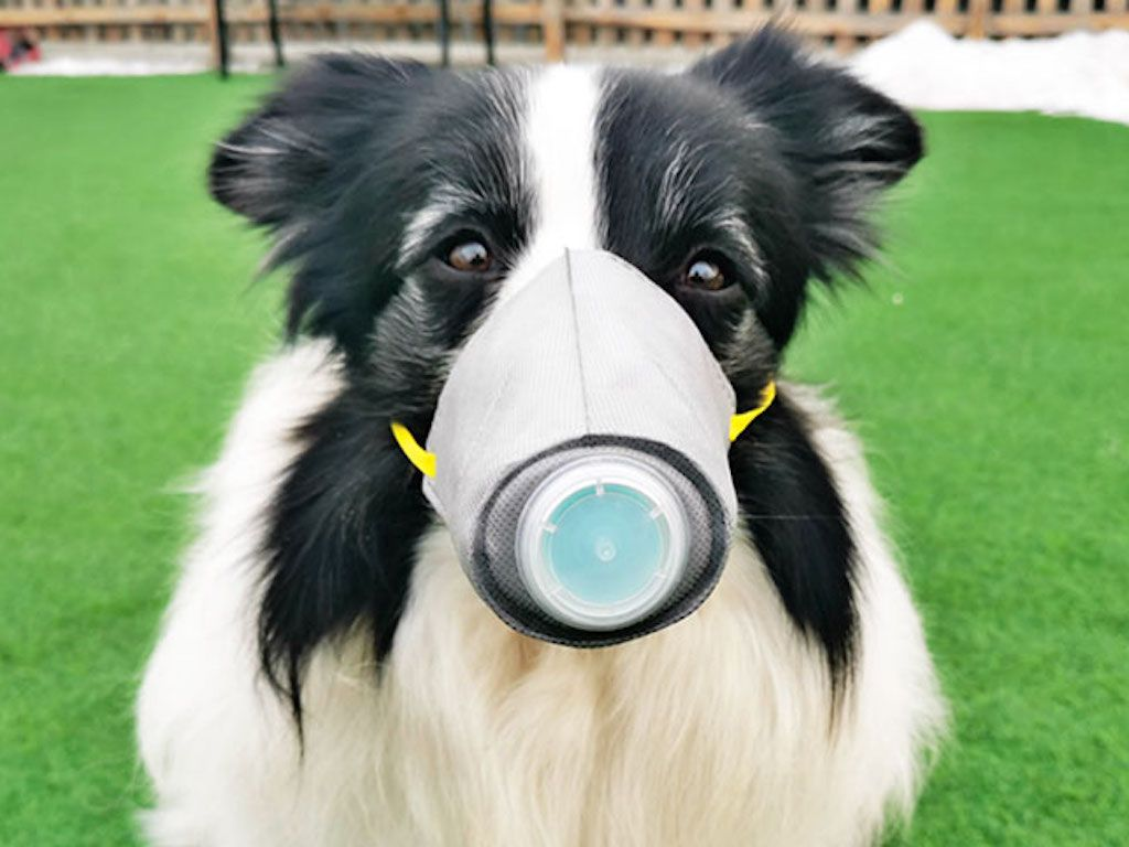 4 Mins Read After Infectious Disease Expert Dr Li Lanjuan Said On Chinese State Television That Pets Should Be Quarantined If T In 2020 Chinese Dog Dog Owners Dog Mask