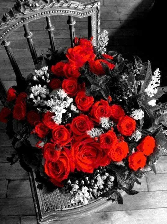 Black And White Picture With Ruby Red Roses Explosao De Cor