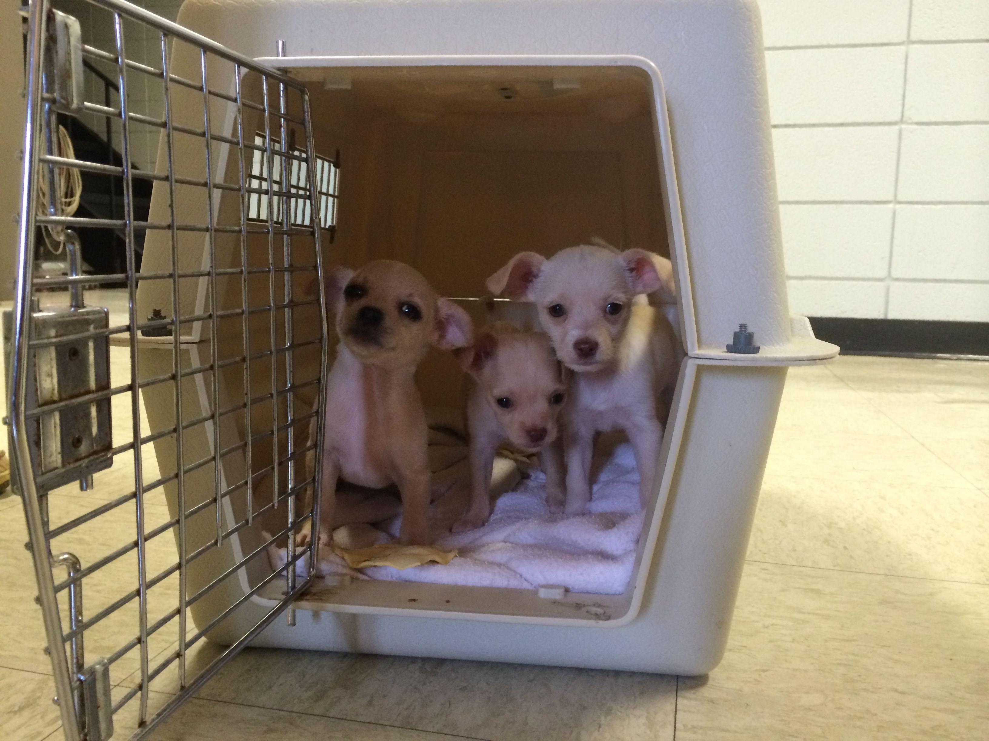 Puppies Sound Good Meet Three Tiny Puppies Tiny Puppies Puppies Sounds Good