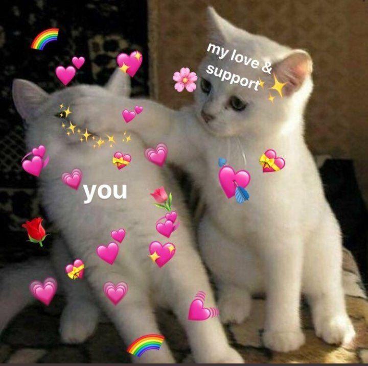 Lgbtqexcellence Hashtag On Twitter Cute Love Memes Love You Meme Cute Memes