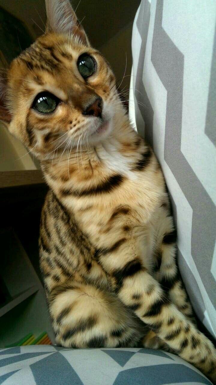 「Cats」おしゃれまとめの人気アイデア Pinterest RMS Titanic 猫