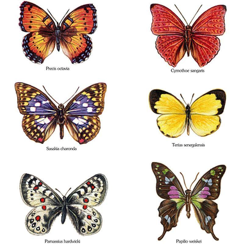 Butterflies Fusible Glass Waterslide Decal Butterfly Watercolor