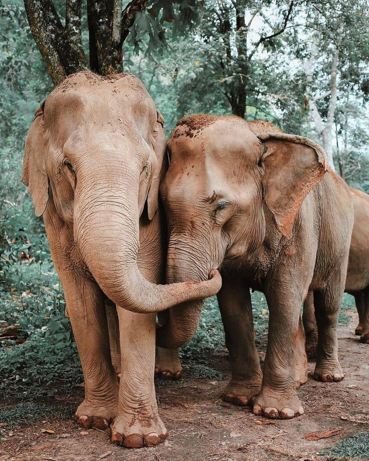 elephants happy dogs dogs aesthetic dogs and puppies