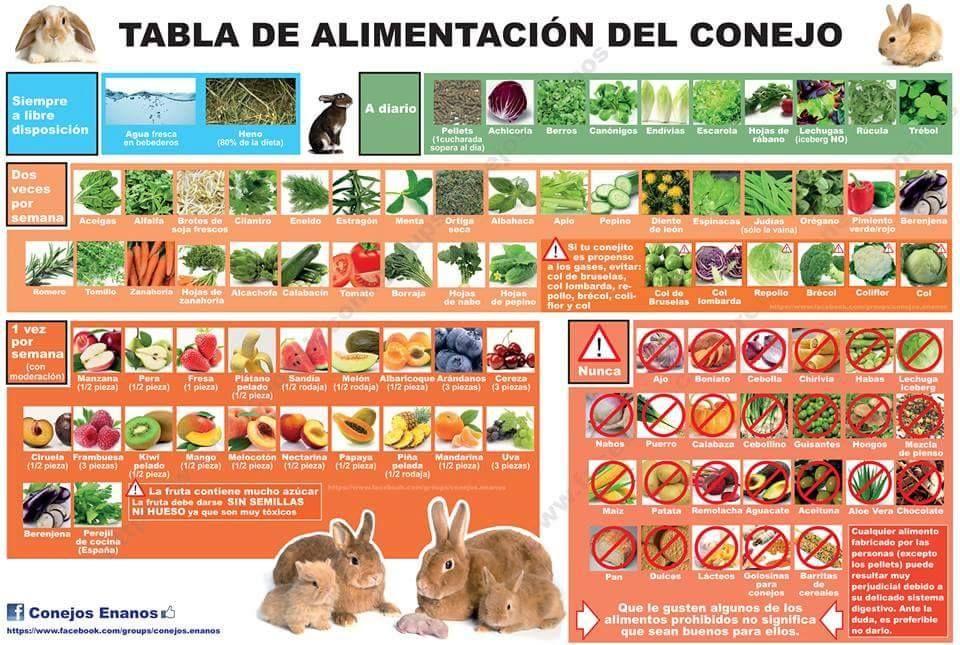Pin En Rabbits