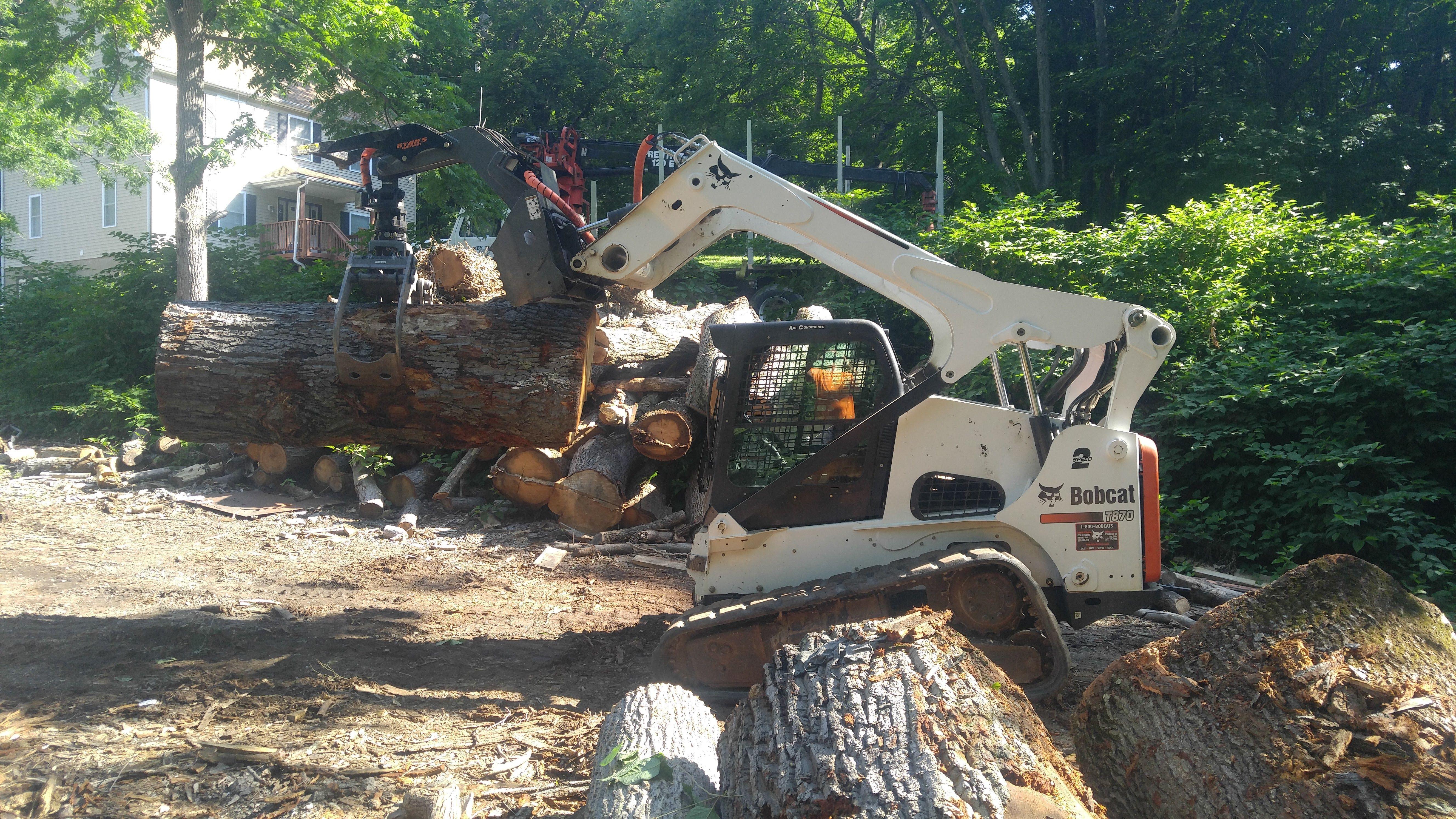 Pin By Hamby Tree Experts On Hamby Tree Experts Tree Experts Tree Removal Tree Pruning