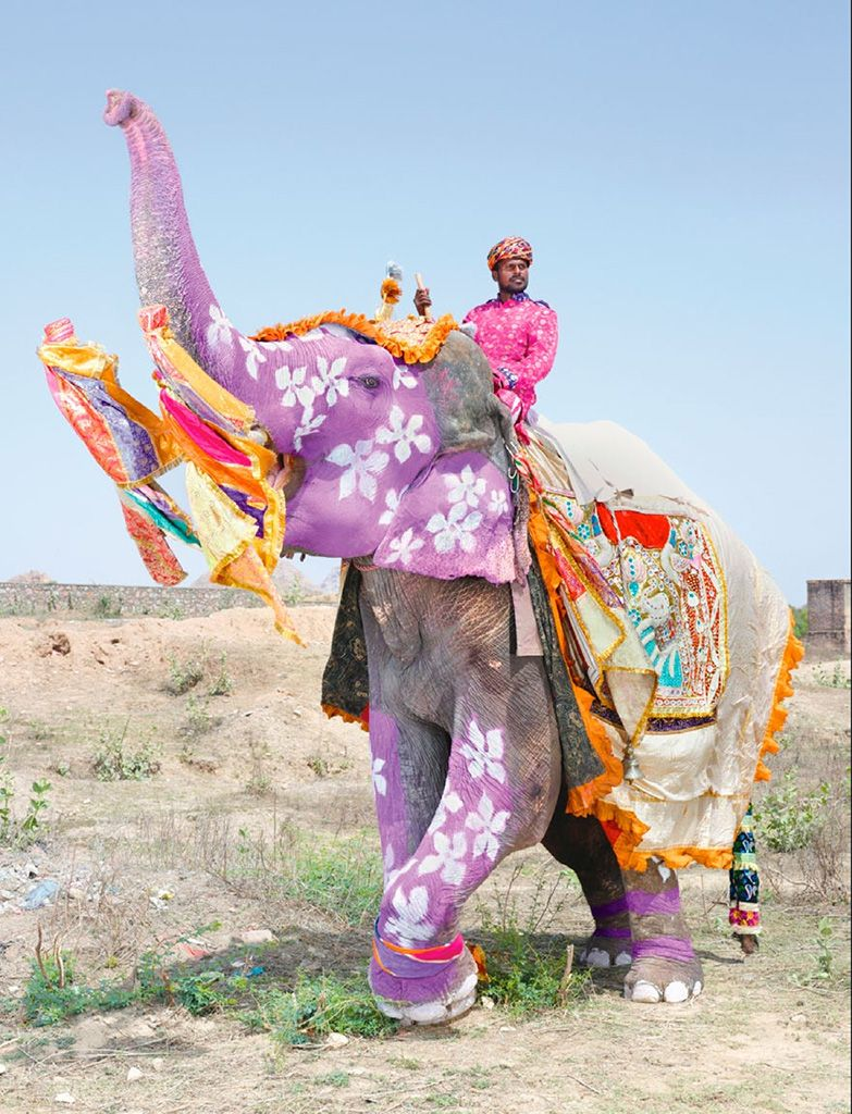 Colorful elephant. Via National Geographic.