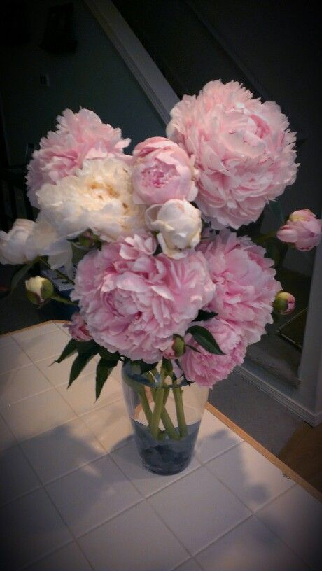 Fresh cut doubled peonies 5/25/14