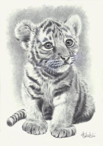 Wild Animal Print Of An Original Pencil Drawing Baby Tiger Size A4