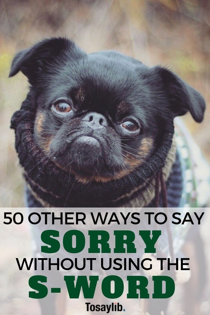50 other ways to say sorry without using the sword ways