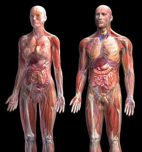 This Is A Great Site For Med Students Learning Anatomy Ross Med