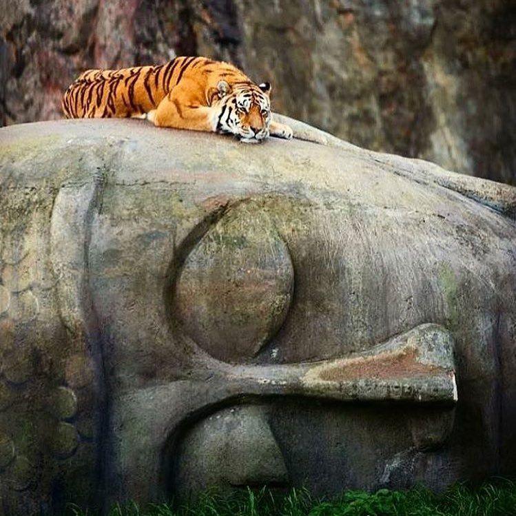 Einen Schönen Guten Morgen Buddhismus Meditation