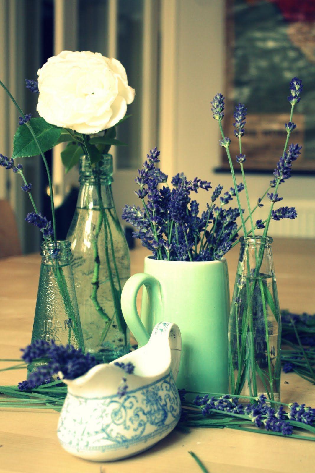 Fresh French Lavender