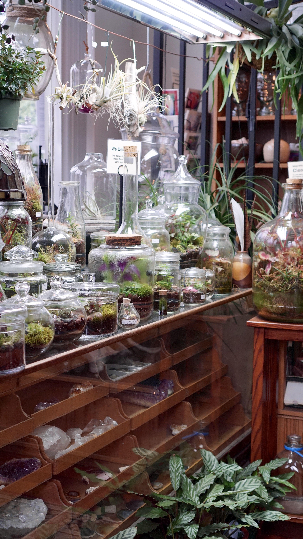 Roosevelt S Terrariums Terrarium Heaven Vivero Hogar Tiendas