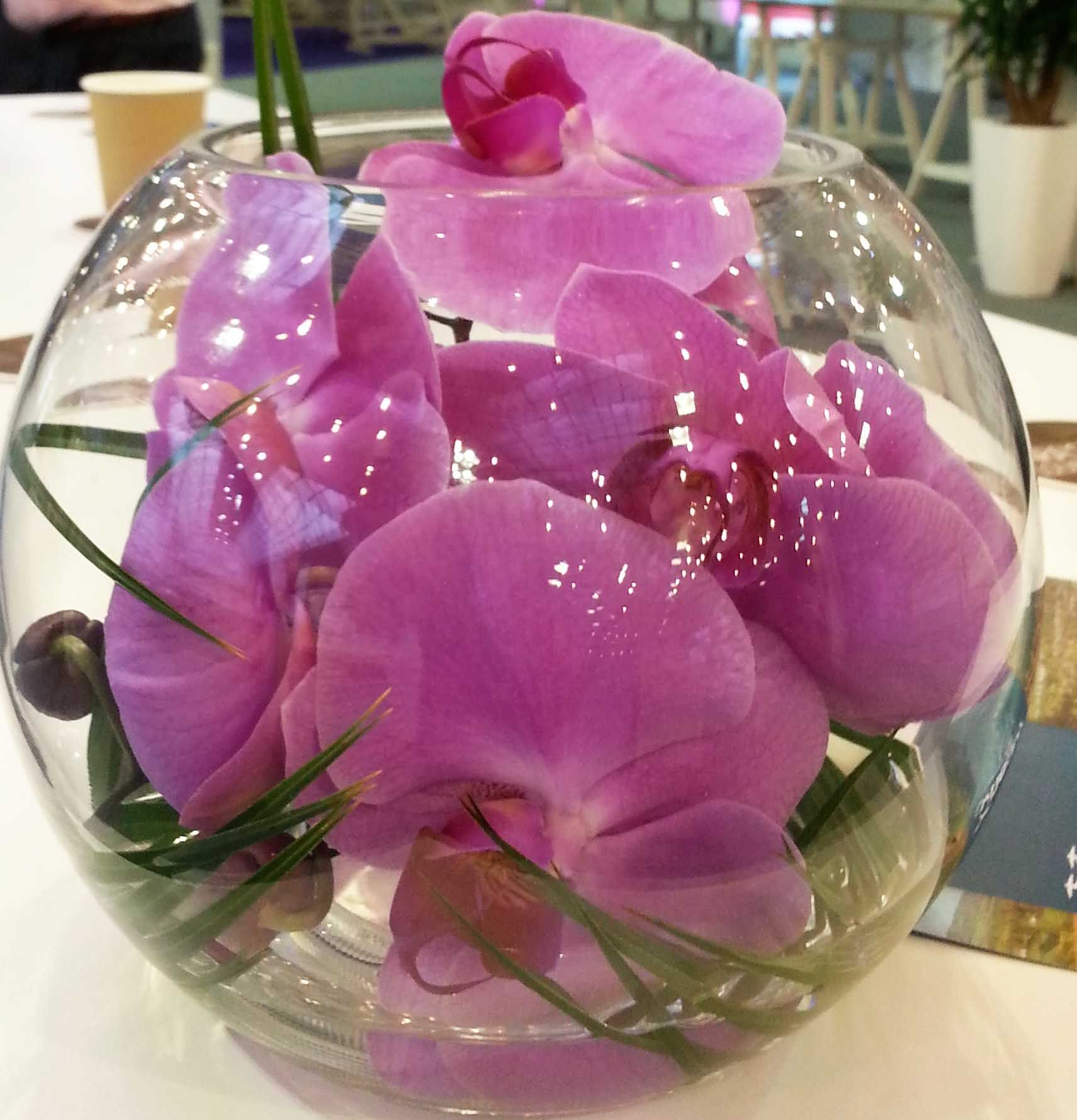 17Pv Purple Phalaenopsis Orchid With Bear Grass Encased In Gold