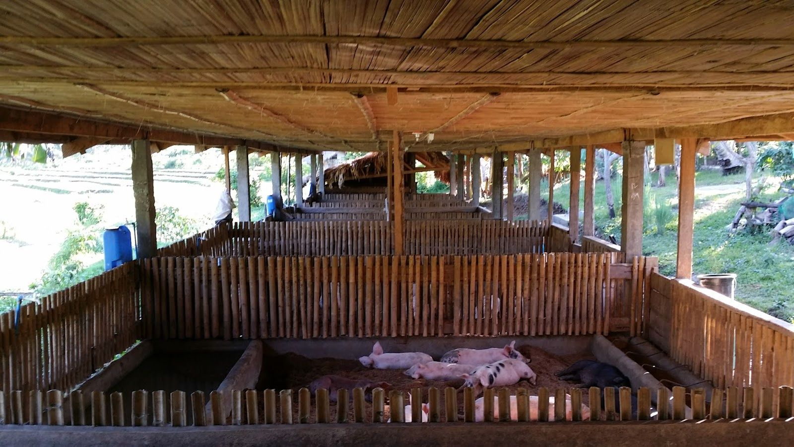 Piggery House Design Philippines House Interior Pig House Bamboo House Philippine Houses