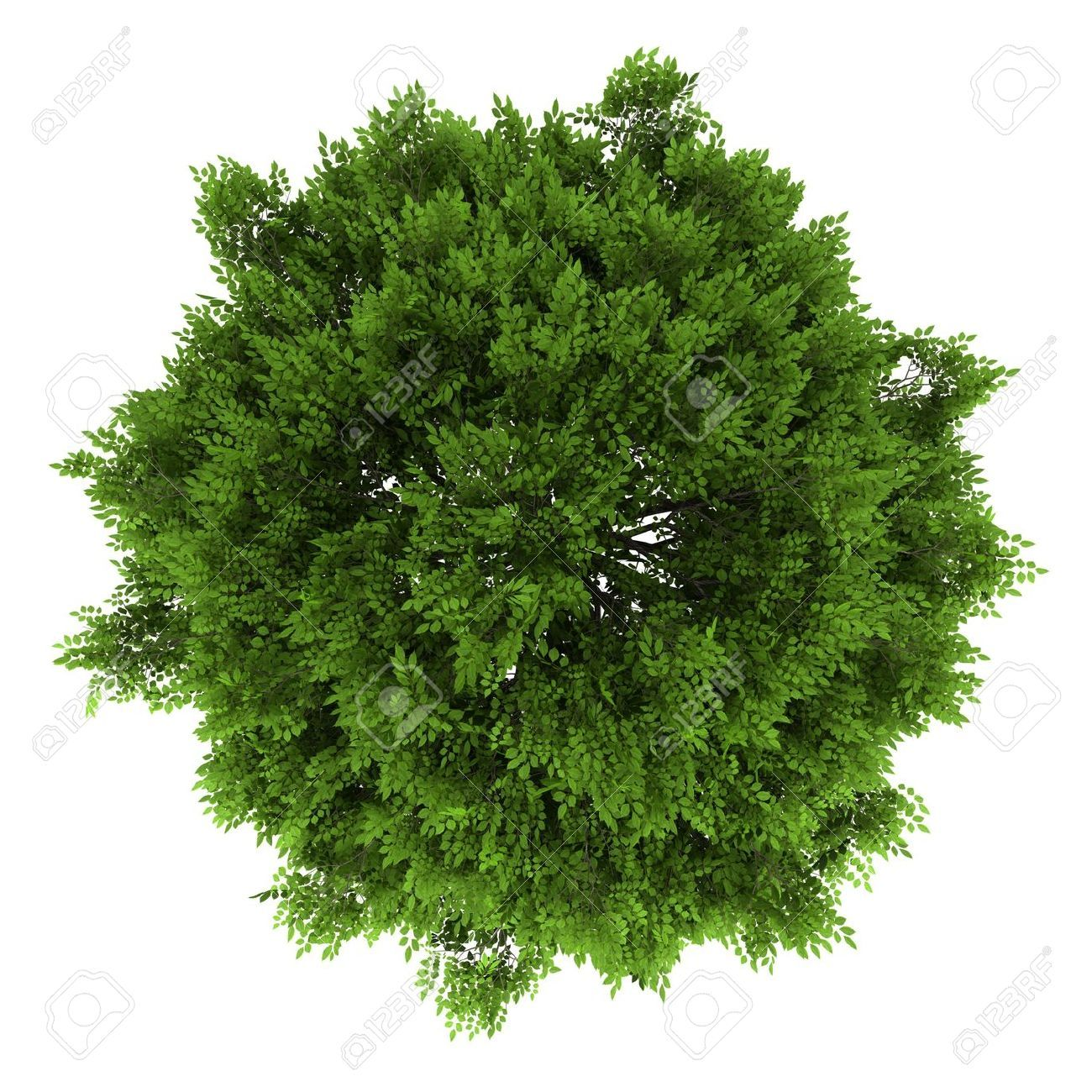 trees top view - Google Search | ref | plant cutouts