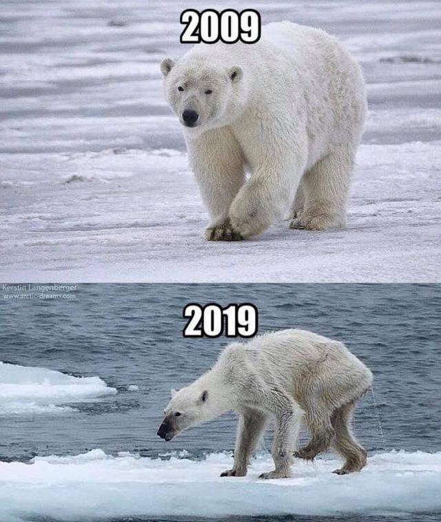 10 years challenge Eisbär