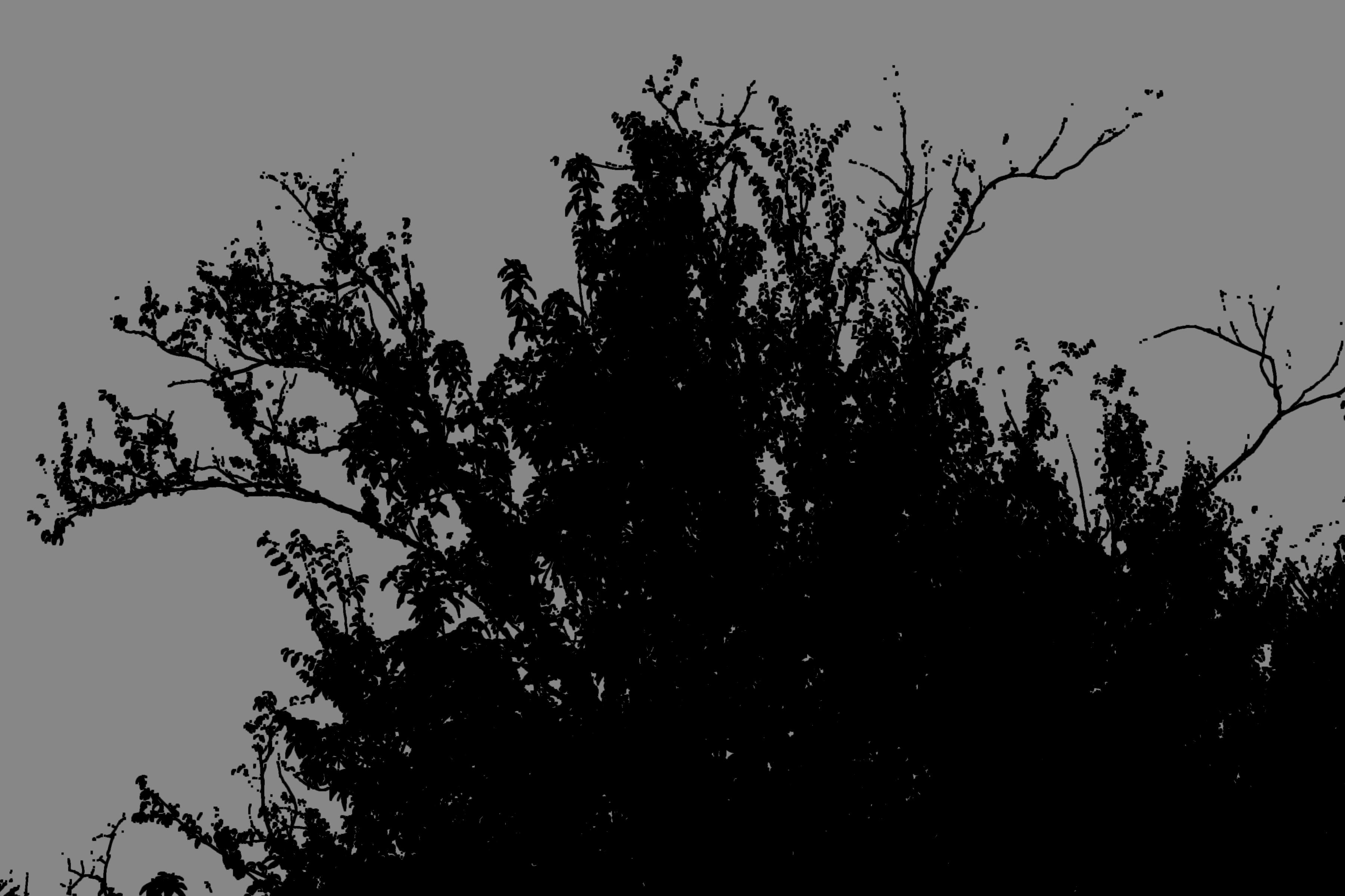Bush Silhouette Arvore Desenho Desenho Arvores