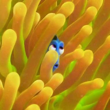 Hot: Finding Dory plays hide-and-seek in four new posters