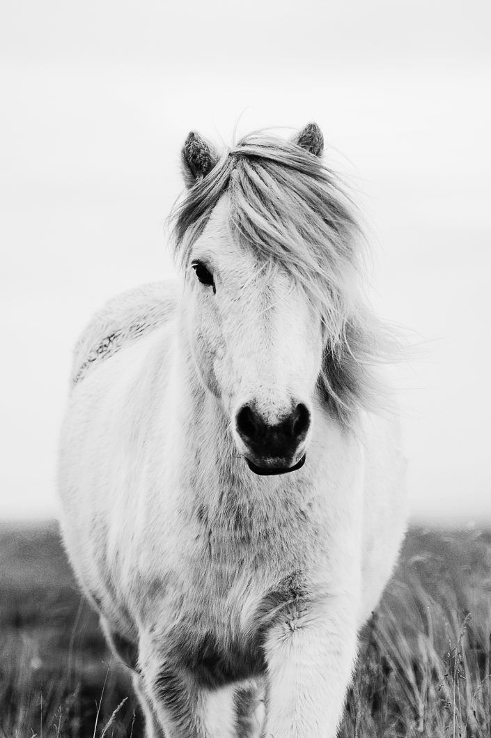 Fotos Pferde In Der Natur I In 2020 Pferde Susseste Haustiere
