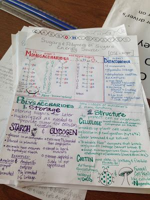 we teach high school carbohydrates summary sheet biochemistry  we teach high school carbohydrates summary sheet
