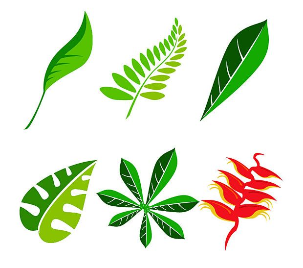 vector jungle leaf vector graphics free vectors graphics rh pinterest com vector jungle background vector jungle leaves