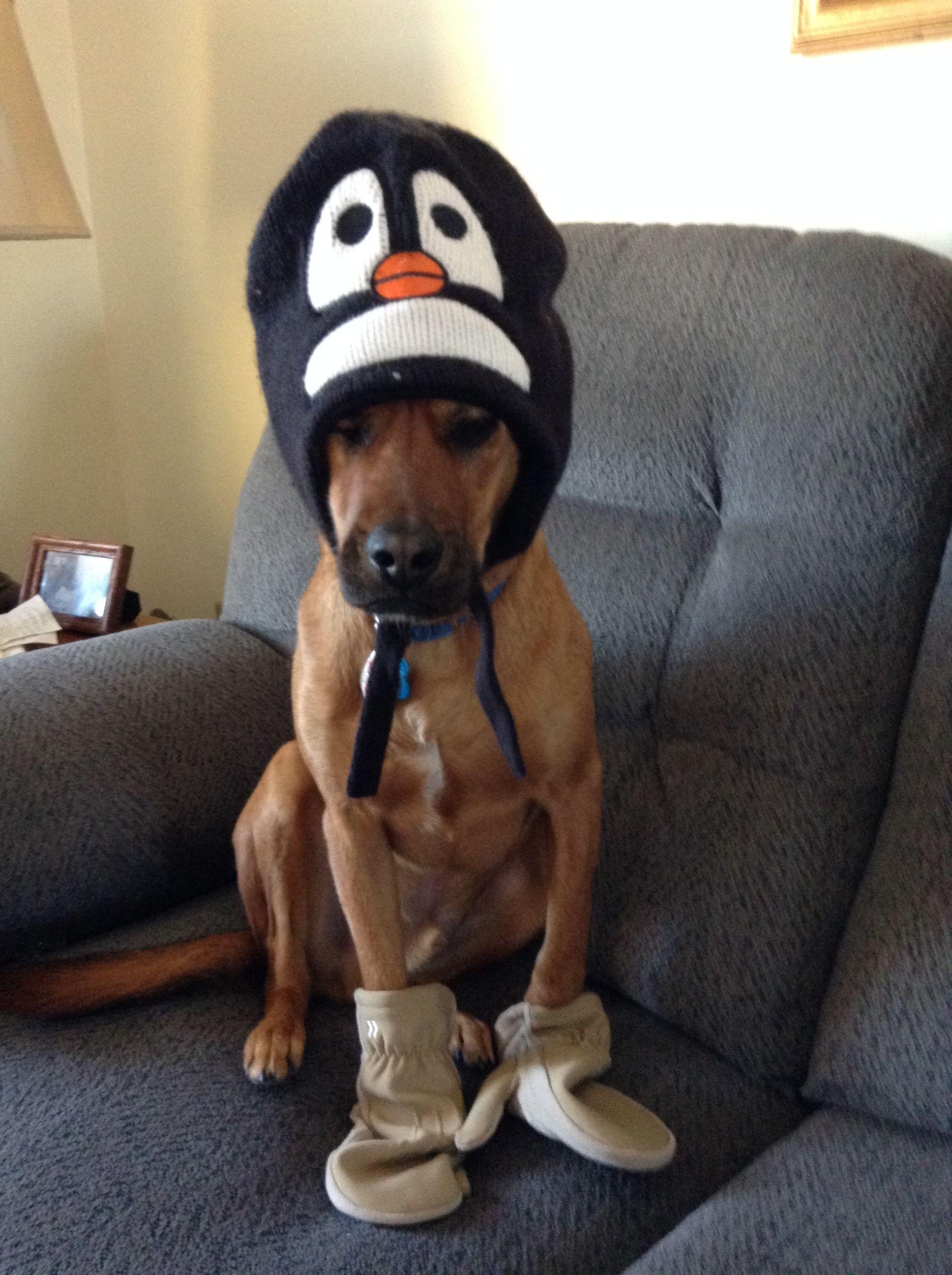 ABC22 Dayton's Dog of the Day Gage Dog days, Dogs, Doggy