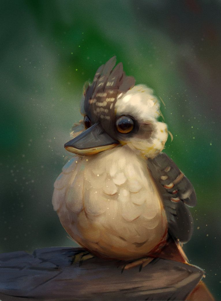 Kookaburra by Murph3