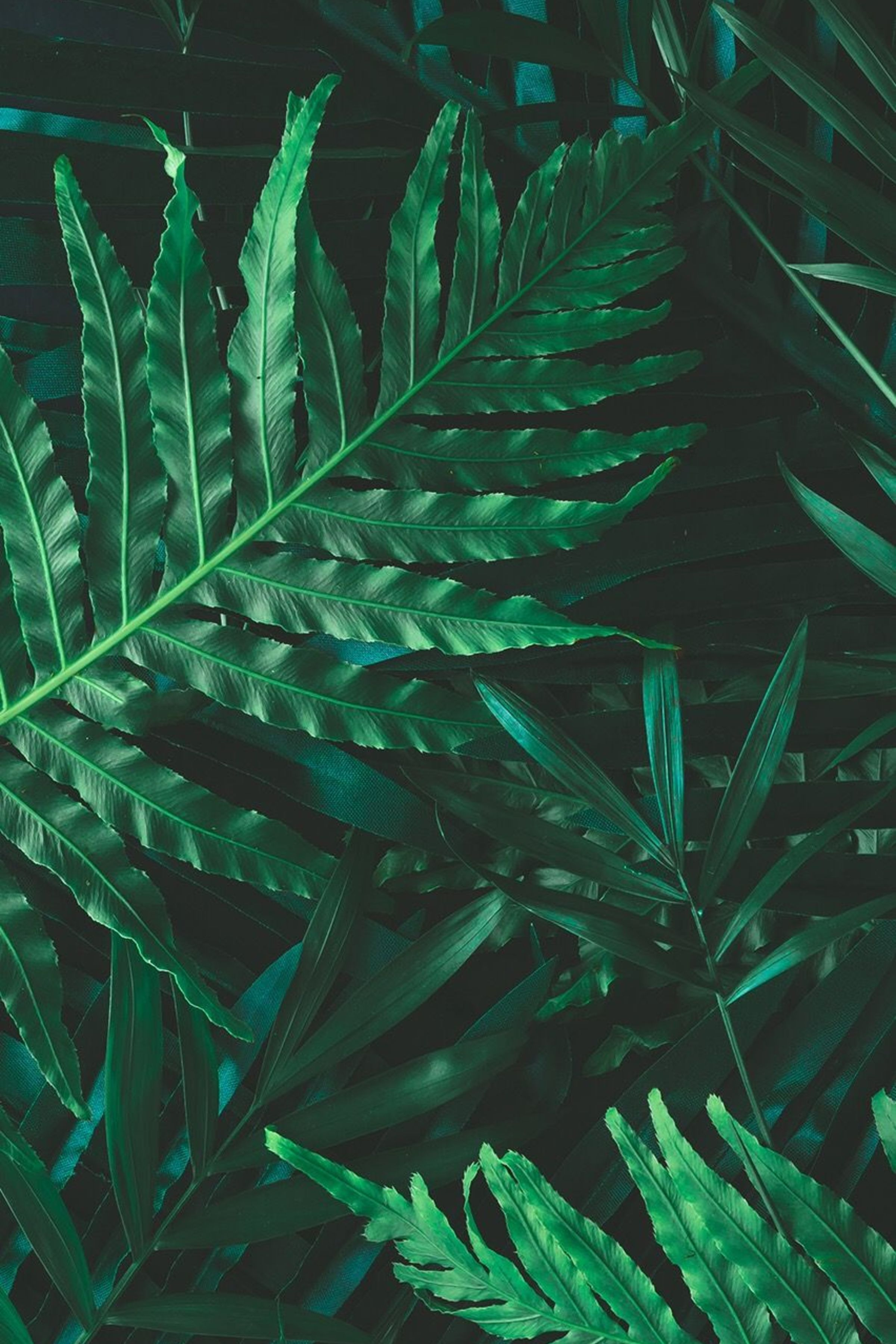 Enjoy The Palm Life Usapalm Com Leaf Wallpaper Green Wallpaper Nature Photography Aesthetic greenery phone wallpaper