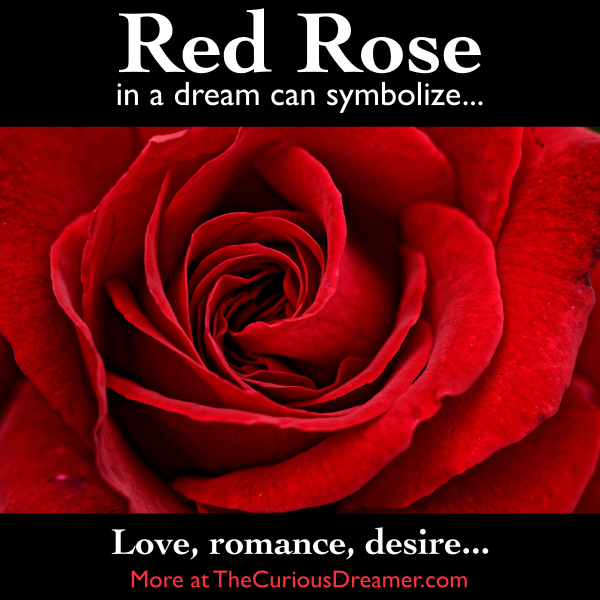 A Red Rose As A Dream Symbol Can Mean More At Http Thecuriousdreamer Com Dreams Dreammeaning Dreamsymbols Dream Symbols Dream Meanings Happy Flowers
