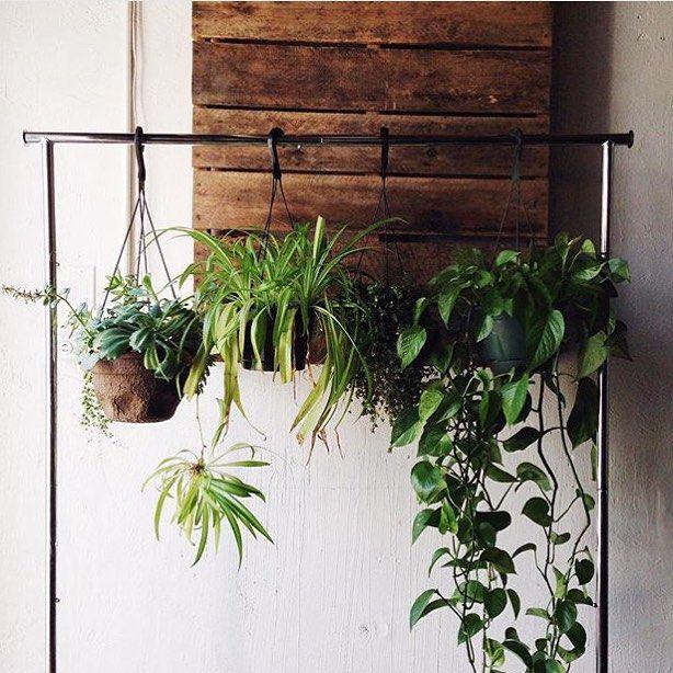 Accesorios para plantas colgantes