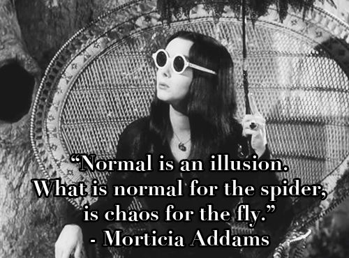 Normal is an illusion what is normal for the spider is chaos for normal is an illusion what is normal for the spider is chaos for altavistaventures Choice Image