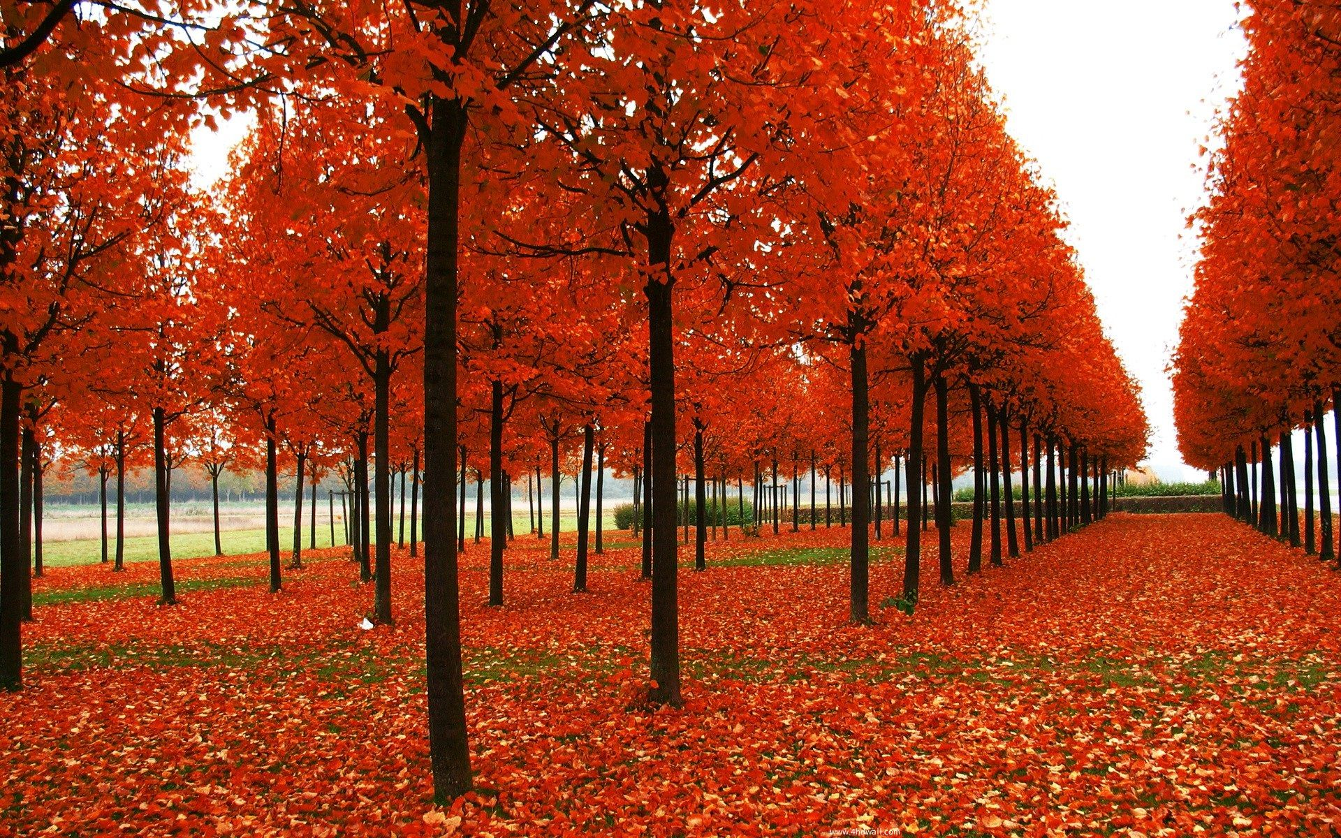 Autumn Season Hd Wallpaper, Seasons Of