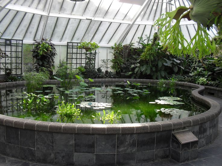 Tilapia pond in greenhouse google search greenhouse for Hydroponics in koi pond