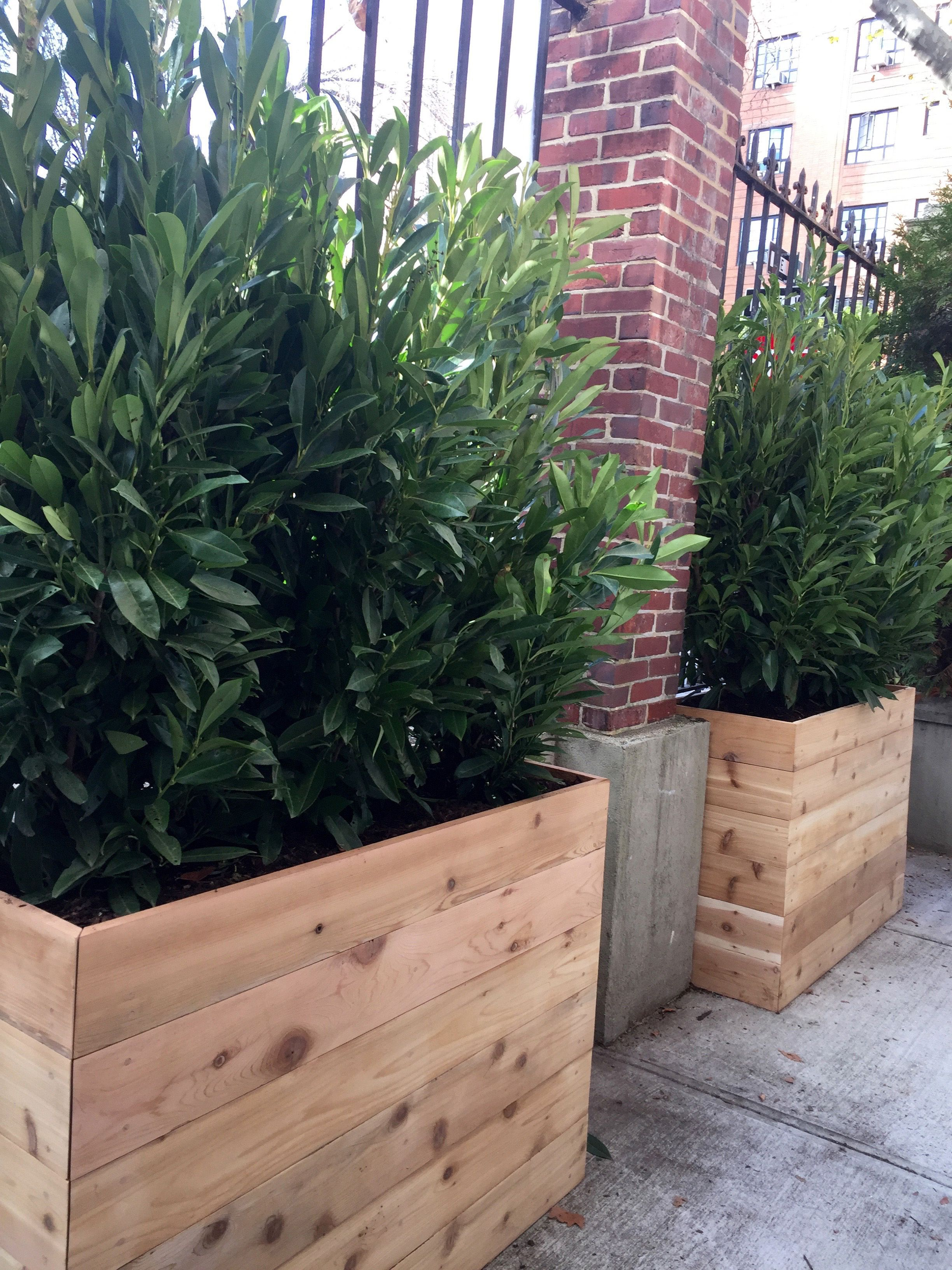 custom cedar planters with evergreen shrubs for privacy. Black Bedroom Furniture Sets. Home Design Ideas